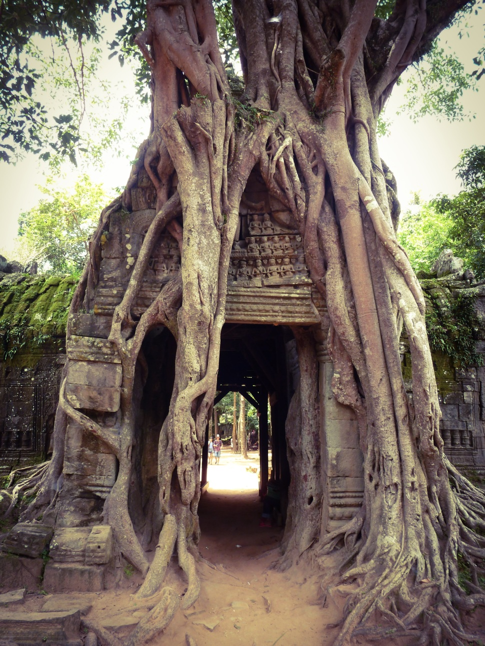 Tree over the gate of Ta Som Temple